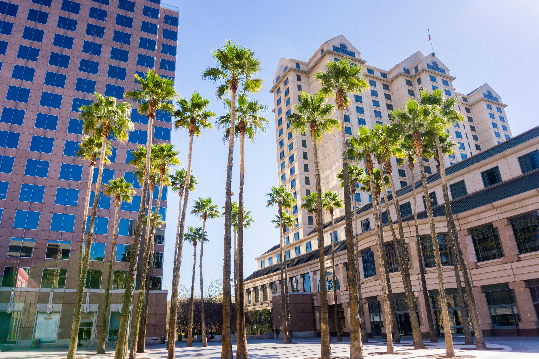 Palm trees in San Jose, California